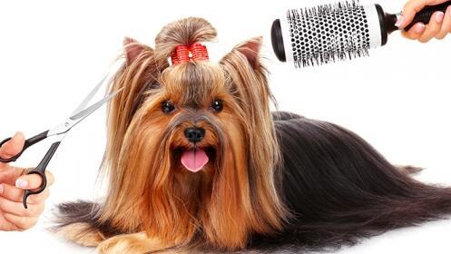 Sesión de peluquería canina lavado o corte + cepillado y tratamiento