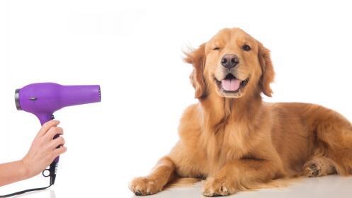 Lavado con opción a corte para perros
